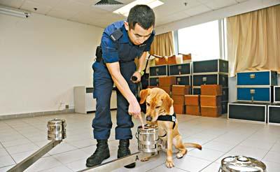 Retired Drug Sniffing Dogs For Adoption